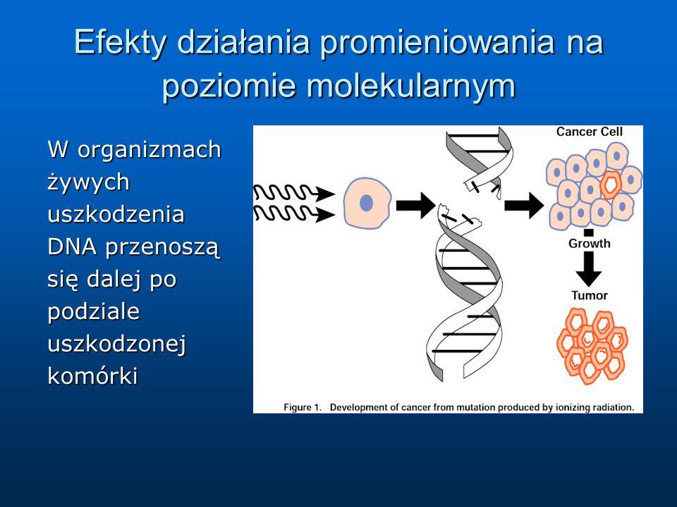 Efekty działania promieniowania na poziomie molekularnym Typowe uszkodzenia: pojedynczo- lub podwójno-niciowe pęknięcia DNA pojedynczo- lub podwójno-niciowe pęknięcia DNA utrata zasad azotowych utrata zasad azotowych uszkodzenia reszt cukrowych i fosforanowych uszkodzenia reszt cukrowych i fosforanowych wiązania krzyżowe w podwójnej nici DNA wiązania krzyżowe w podwójnej nici DNA