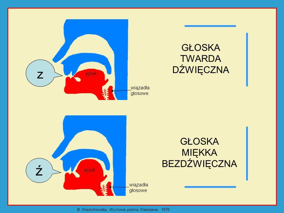 język wiązadła głosowe GŁOSKA DŹWIĘCZNA TYLNOJĘZYKOWA język wiązadła głosowe g k GŁOSKA BEZDŹWIĘCZNA TYLNOJĘZYKOWA B.