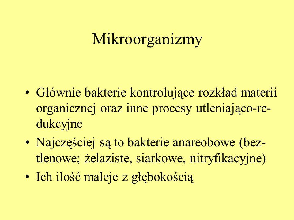 Mikroorganizmy Głównie bakterie kontrolujące rozkład materii organicznej oraz inne procesy utleniająco-re- dukcyjne Najczęściej są to bakterie anareob
