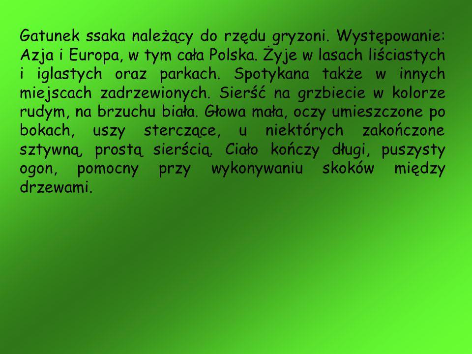 Gatunek ssaka należący do rzędu gryzoni. Występowanie: Azja i Europa, w tym cała Polska. Żyje w lasach liściastych i iglastych oraz parkach. Spotykana