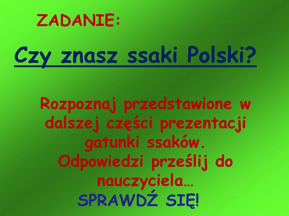ZADANIE: Czy znasz ssaki Polski? Rozpoznaj przedstawione w dalszej części prezentacji gatunki ssaków. Odpowiedzi prześlij do nauczyciela… SPRAWDŹ SIĘ!