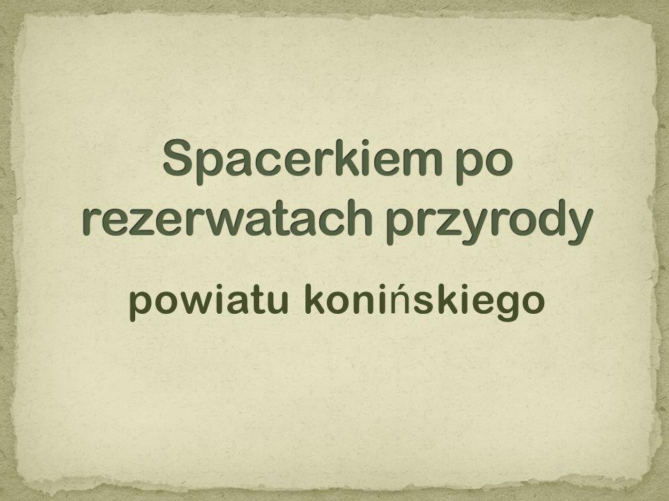 jest najstarszym rezerwatem na terenie Puszczy Bieniszewskiej, powstał w 1957 r.