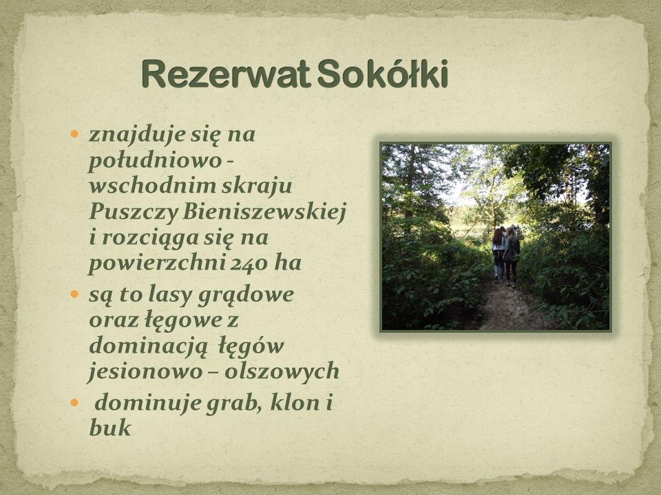 znajduje się na południowo - wschodnim skraju Puszczy Bieniszewskiej i rozciąga się na powierzchni 240 ha są to lasy grądowe oraz łęgowe z dominacją ł