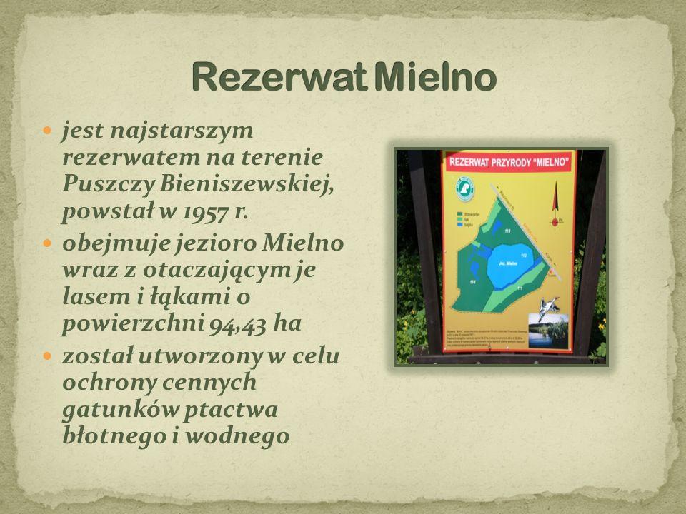 jest najstarszym rezerwatem na terenie Puszczy Bieniszewskiej, powstał w 1957 r. obejmuje jezioro Mielno wraz z otaczającym je lasem i łąkami o powier