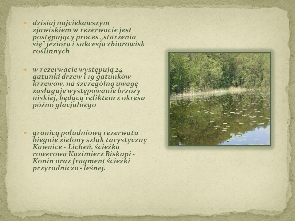 """dzisiaj najciekawszym zjawiskiem w rezerwacie jest postępujący proces """"starzenia się"""" jeziora i sukcesja zbiorowisk roślinnych w rezerwacie występują"""