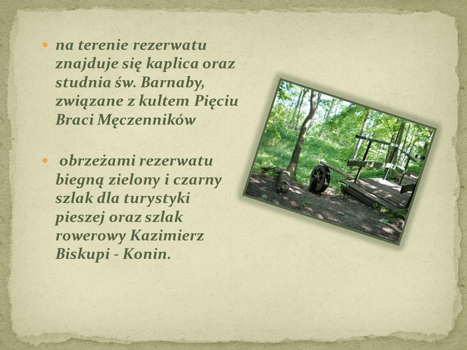 na terenie rezerwatu znajduje się kaplica oraz studnia św. Barnaby, związane z kultem Pięciu Braci Męczenników obrzeżami rezerwatu biegną zielony i cz