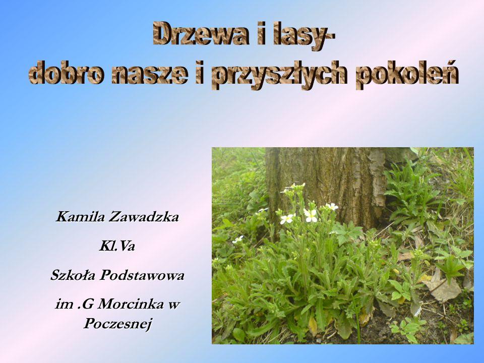 Kamila Zawadzka Kl.Va Szkoła Podstawowa im.G Morcinka w Poczesnej
