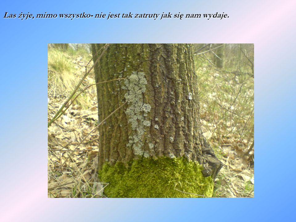 Las żyje, mimo wszystko- nie jest tak zatruty jak się nam wydaje.