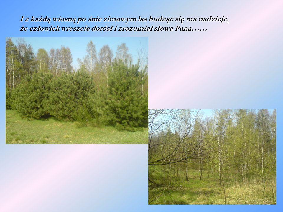 I z każdą wiosną po śnie zimowym las budząc się ma nadzieje, że człowiek wreszcie dorósł i zrozumiał słowa Pana……
