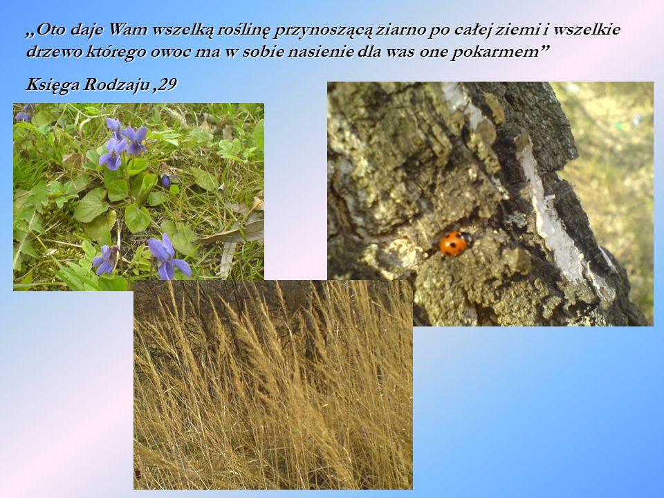 ,,Oto daje Wam wszelką roślinę przynoszącą ziarno po całej ziemi i wszelkie drzewo którego owoc ma w sobie nasienie dla was one pokarmem Księga Rodzaju,29