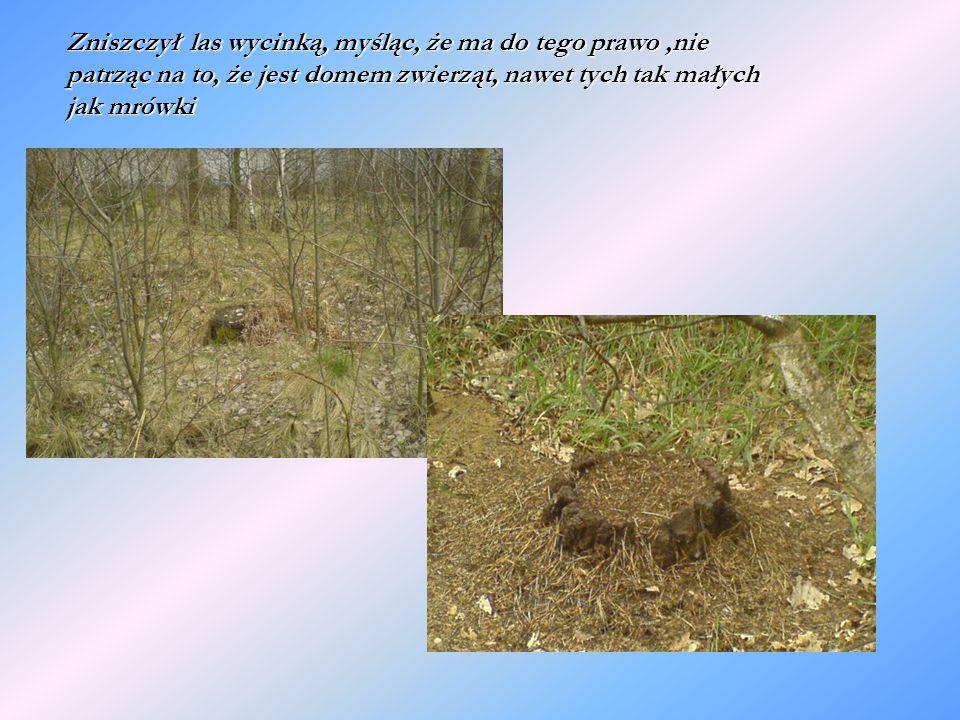 Zniszczył las wycinką, myśląc, że ma do tego prawo,nie patrząc na to, że jest domem zwierząt, nawet tych tak małych jak mrówki