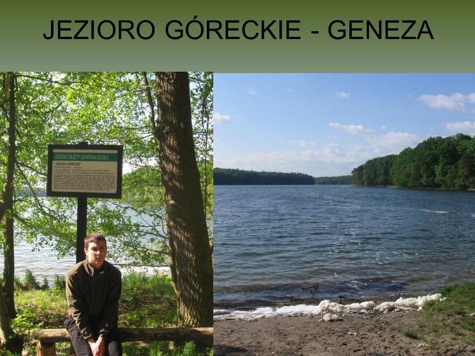 JEZIORO GÓRECKIE - GENEZA