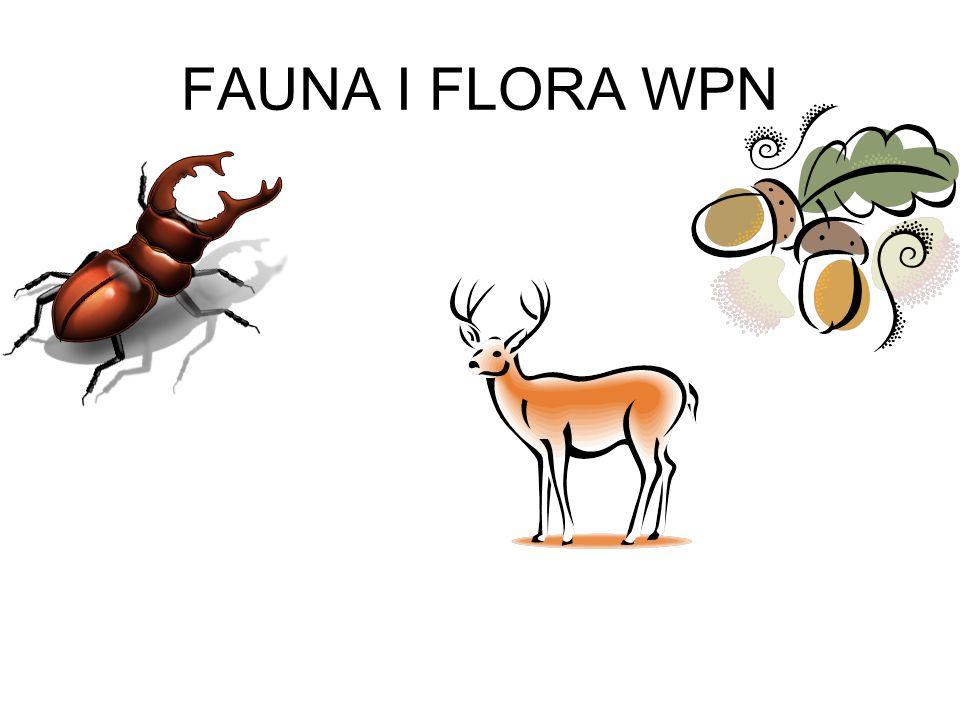 FAUNA I FLORA WPN