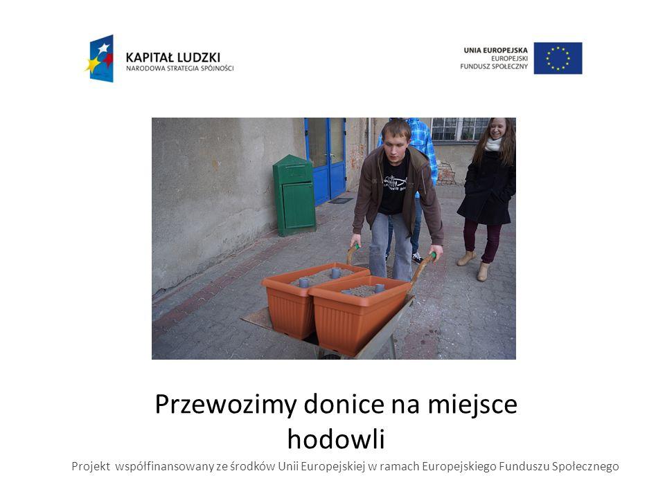 Przewozimy donice na miejsce hodowli Projekt współfinansowany ze środków Unii Europejskiej w ramach Europejskiego Funduszu Społecznego