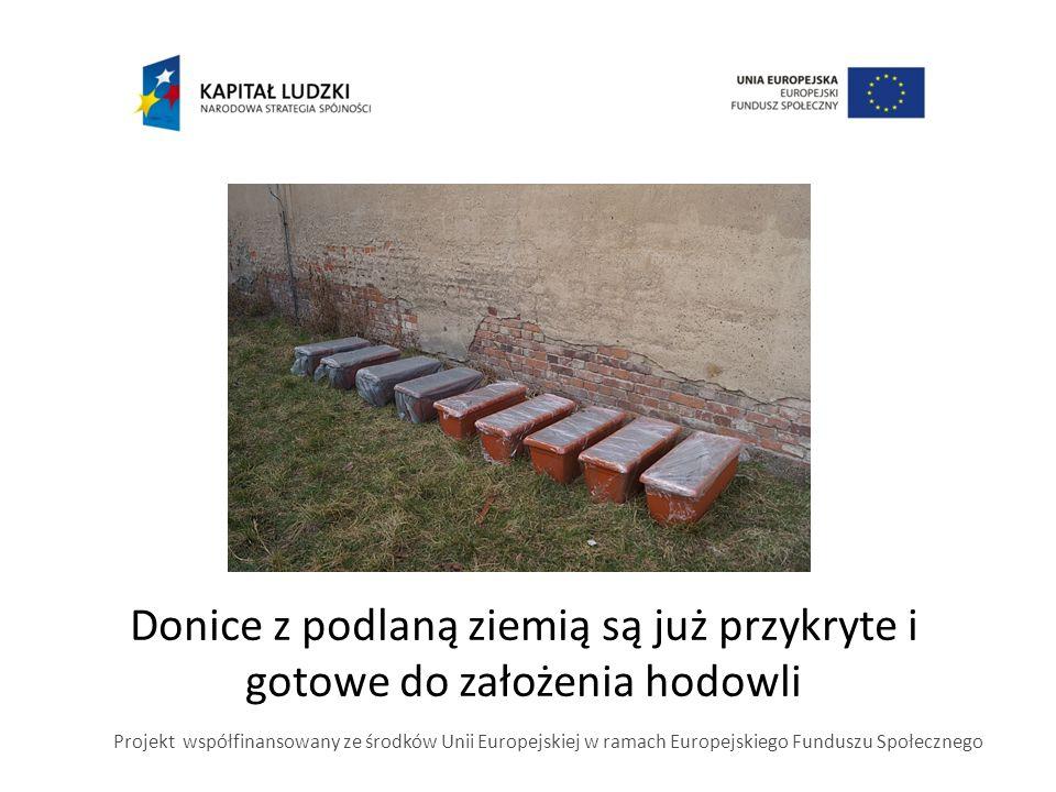 Donice z podlaną ziemią są już przykryte i gotowe do założenia hodowli Projekt współfinansowany ze środków Unii Europejskiej w ramach Europejskiego Funduszu Społecznego