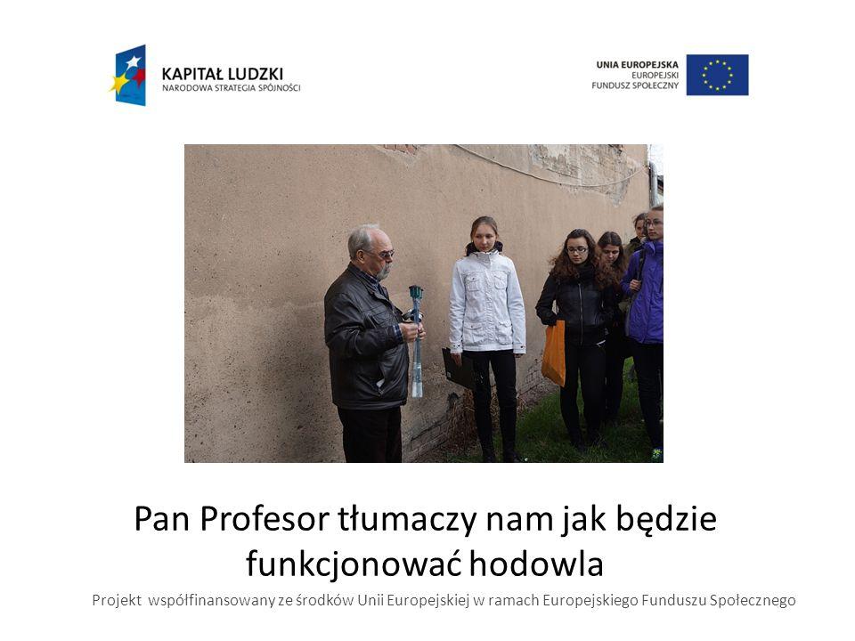 Pan Profesor tłumaczy nam jak będzie funkcjonować hodowla Projekt współfinansowany ze środków Unii Europejskiej w ramach Europejskiego Funduszu Społecznego