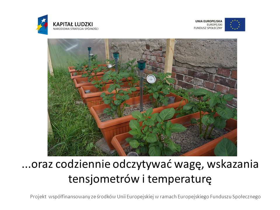 ...oraz codziennie odczytywać wagę, wskazania tensjometrów i temperaturę Projekt współfinansowany ze środków Unii Europejskiej w ramach Europejskiego