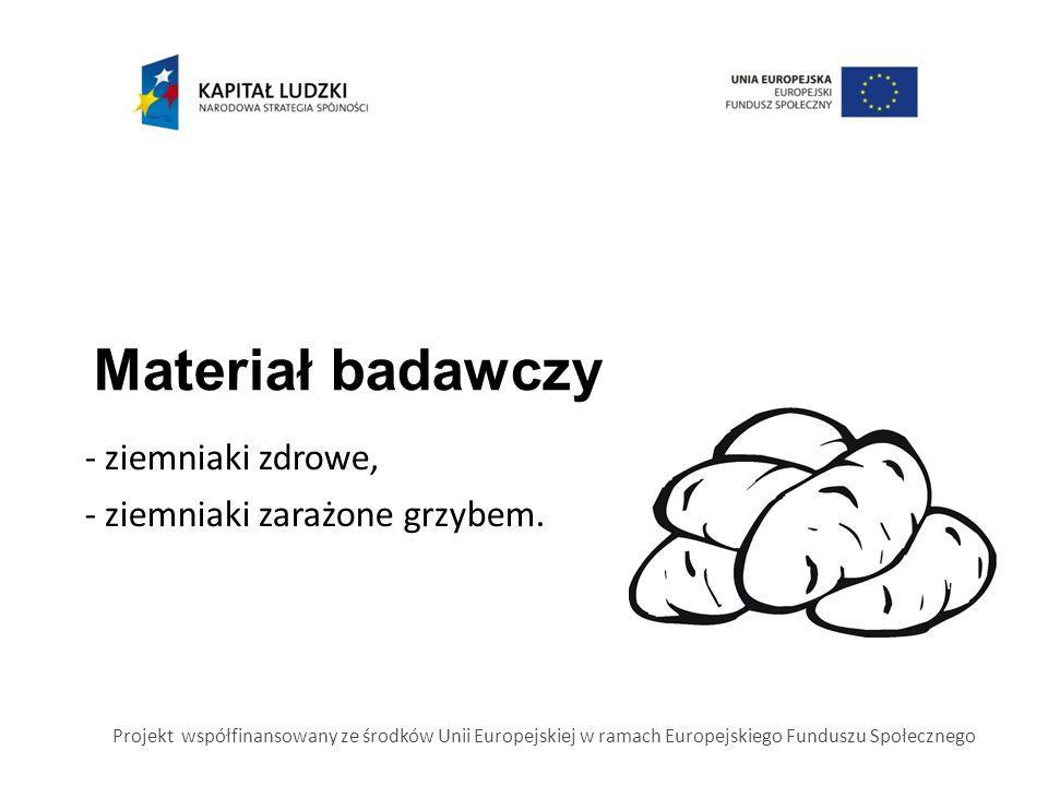 Materiał badawczy Projekt współfinansowany ze środków Unii Europejskiej w ramach Europejskiego Funduszu Społecznego - ziemniaki zdrowe, - ziemniaki zarażone grzybem.
