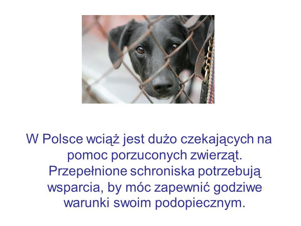 W Polsce wciąż jest dużo czekających na pomoc porzuconych zwierząt. Przepełnione schroniska potrzebują wsparcia, by móc zapewnić godziwe warunki swoim