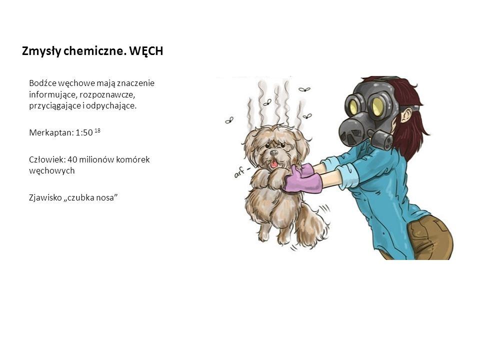 Zmysły chemiczne. WĘCH Bodźce węchowe mają znaczenie informujące, rozpoznawcze, przyciągające i odpychające. Merkaptan: 1:50 18 Człowiek: 40 milionów