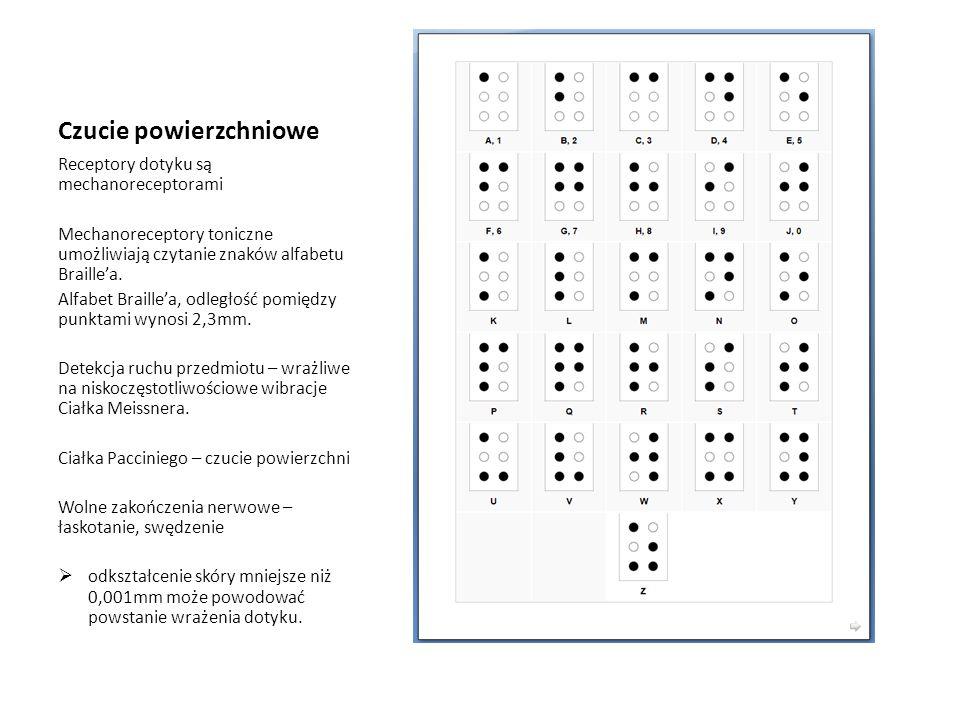 Czucie powierzchniowe Receptory dotyku są mechanoreceptorami Mechanoreceptory toniczne umożliwiają czytanie znaków alfabetu Braille'a. Alfabet Braille