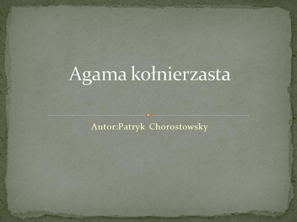 Autor:Patryk Chorostowsky