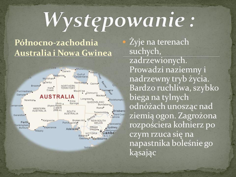 Północno-zachodnia Australia i Nowa Gwinea Żyje na terenach suchych, zadrzewionych. Prowadzi naziemny i nadrzewny tryb życia. Bardzo ruchliwa, szybko