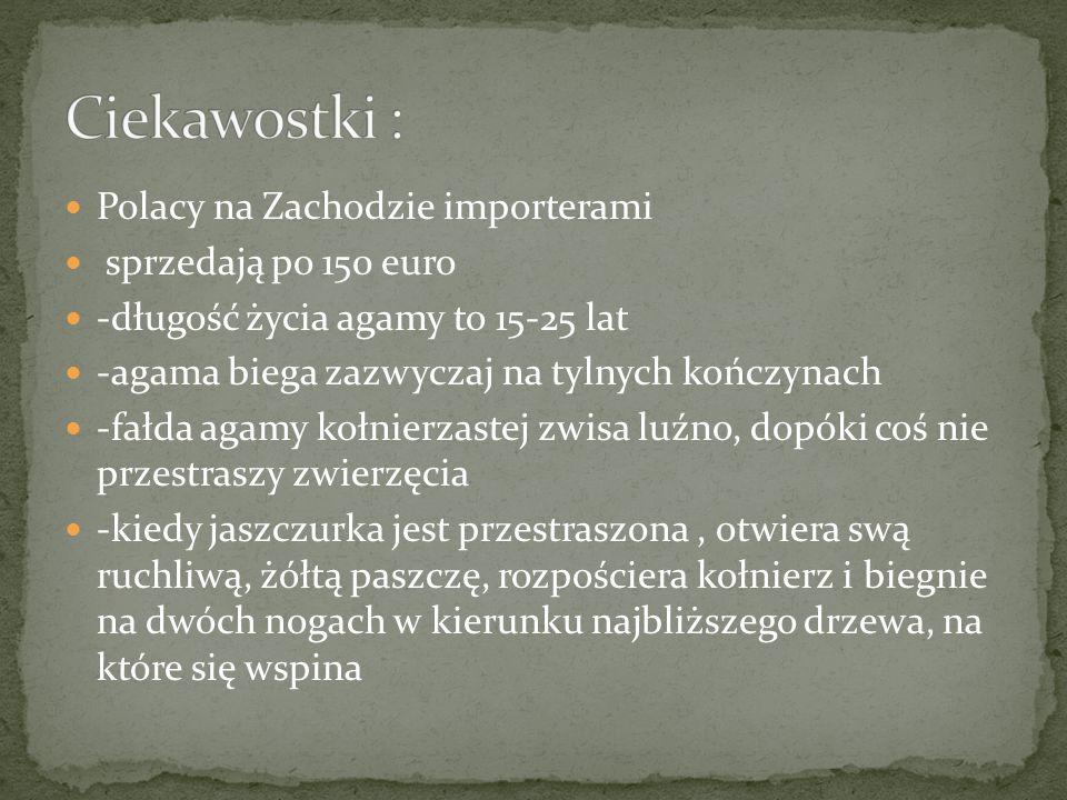 Polacy na Zachodzie importerami sprzedają po 150 euro -długość życia agamy to 15-25 lat -agama biega zazwyczaj na tylnych kończynach -fałda agamy kołn