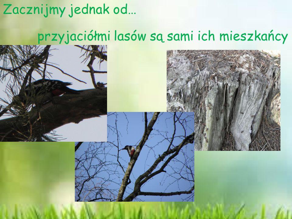 przyjaciółmi lasów są sami ich mieszkańcy Zacznijmy jednak od…