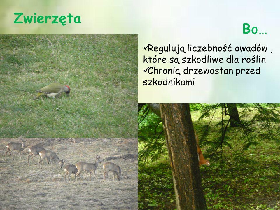 Zwierzęta Bo… Regulują liczebność owadów, które są szkodliwe dla roślin Chronią drzewostan przed szkodnikami