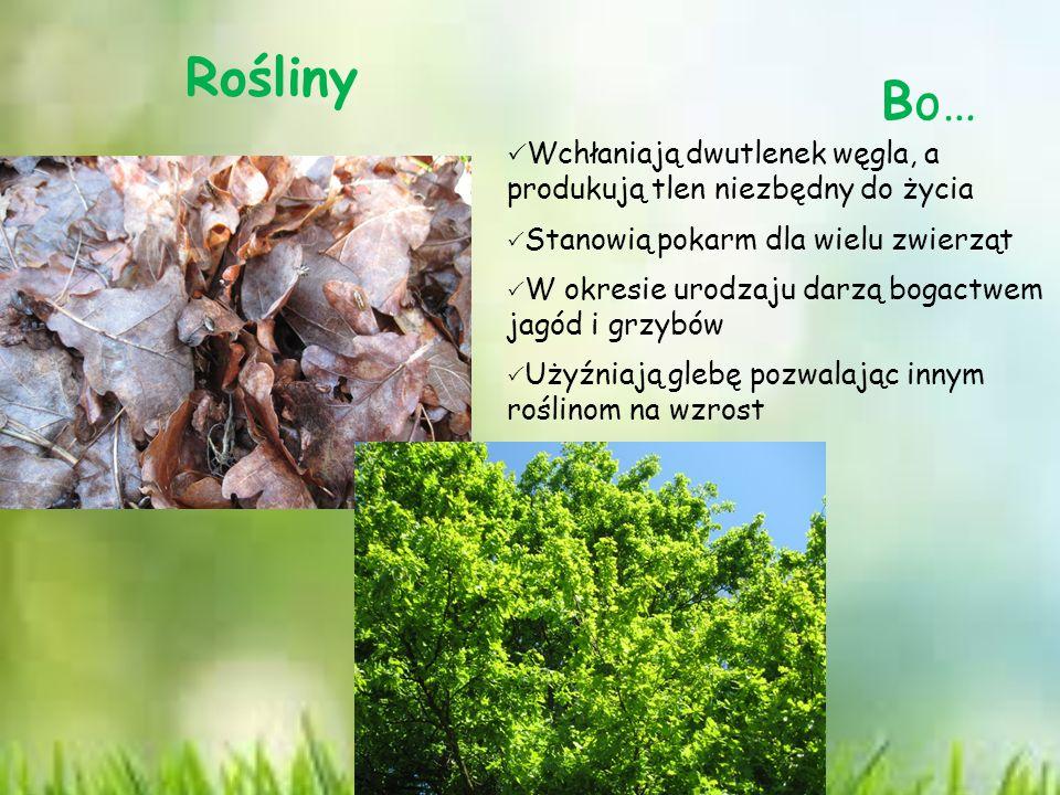 Rośliny Bo…  Wchłaniają dwutlenek węgla, a produkują tlen niezbędny do życia  Stanowią pokarm dla wielu zwierząt  W okresie urodzaju darzą bogactwem jagód i grzybów  Użyźniają glebę pozwalając innym roślinom na wzrost