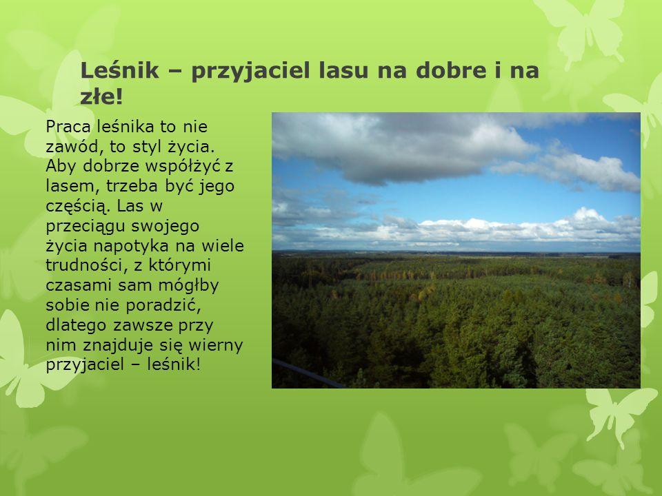 Leśnik – przyjaciel lasu na dobre i na złe! Praca leśnika to nie zawód, to styl życia. Aby dobrze współżyć z lasem, trzeba być jego częścią. Las w prz
