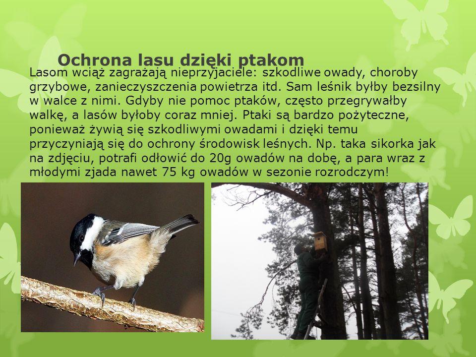 Ochrona lasu dzięki ptakom Lasom wciąż zagrażają nieprzyjaciele: szkodliwe owady, choroby grzybowe, zanieczyszczenia powietrza itd. Sam leśnik byłby b