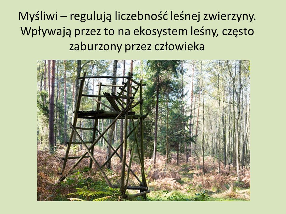 Myśliwi – regulują liczebność leśnej zwierzyny. Wpływają przez to na ekosystem leśny, często zaburzony przez człowieka