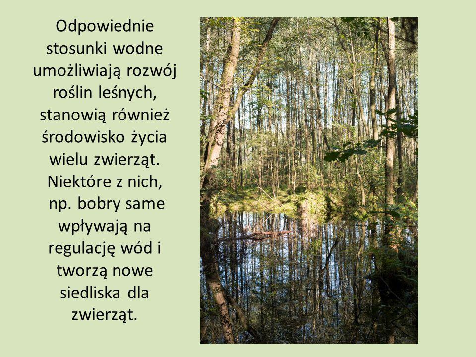 Odpowiednie stosunki wodne umożliwiają rozwój roślin leśnych, stanowią również środowisko życia wielu zwierząt. Niektóre z nich, np. bobry same wpływa