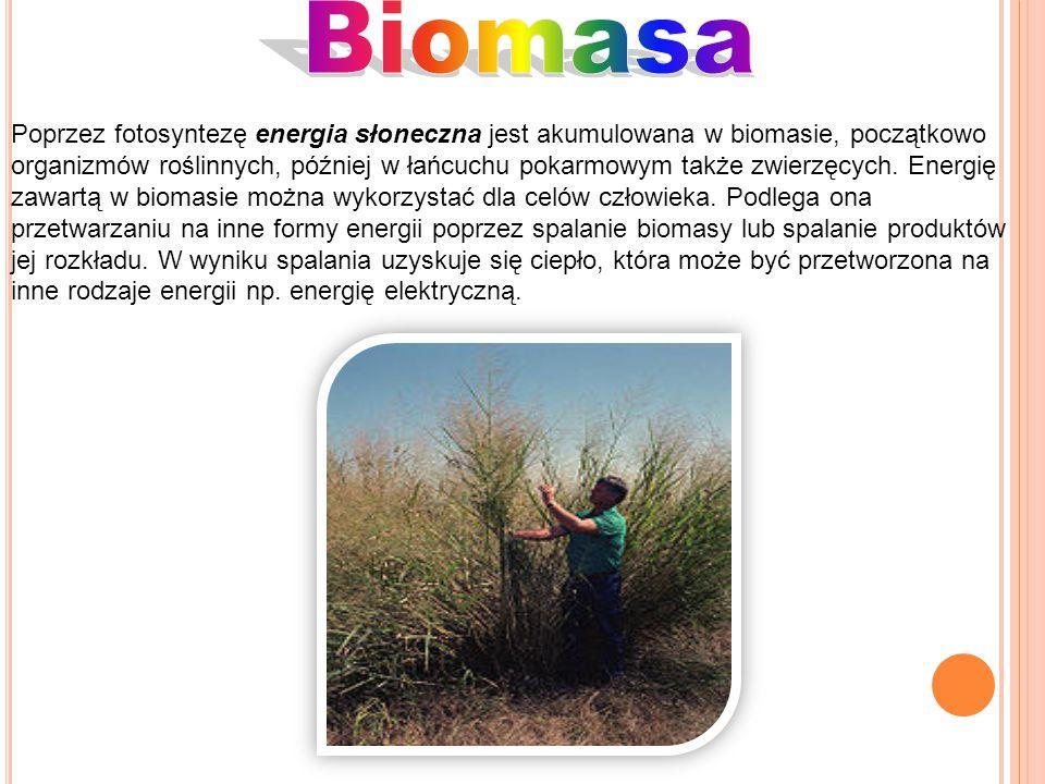 Poprzez fotosyntezę energia słoneczna jest akumulowana w biomasie, początkowo organizmów roślinnych, później w łańcuchu pokarmowym także zwierzęcych.