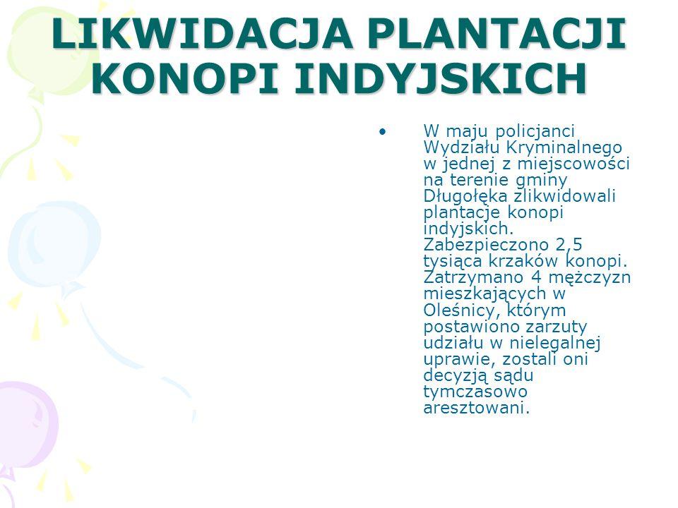 LIKWIDACJA PLANTACJI KONOPI INDYJSKICH W maju policjanci Wydziału Kryminalnego w jednej z miejscowości na terenie gminy Długołęka zlikwidowali plantacje konopi indyjskich.