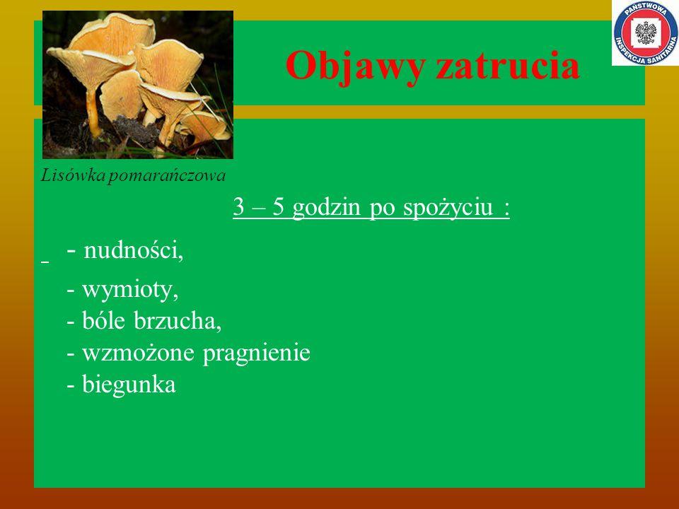 Objawy zatrucia Lisówka pomarańczowa 3 – 5 godzin po spożyciu : - nudności, - wymioty, - bóle brzucha, - wzmożone pragnienie - biegunka