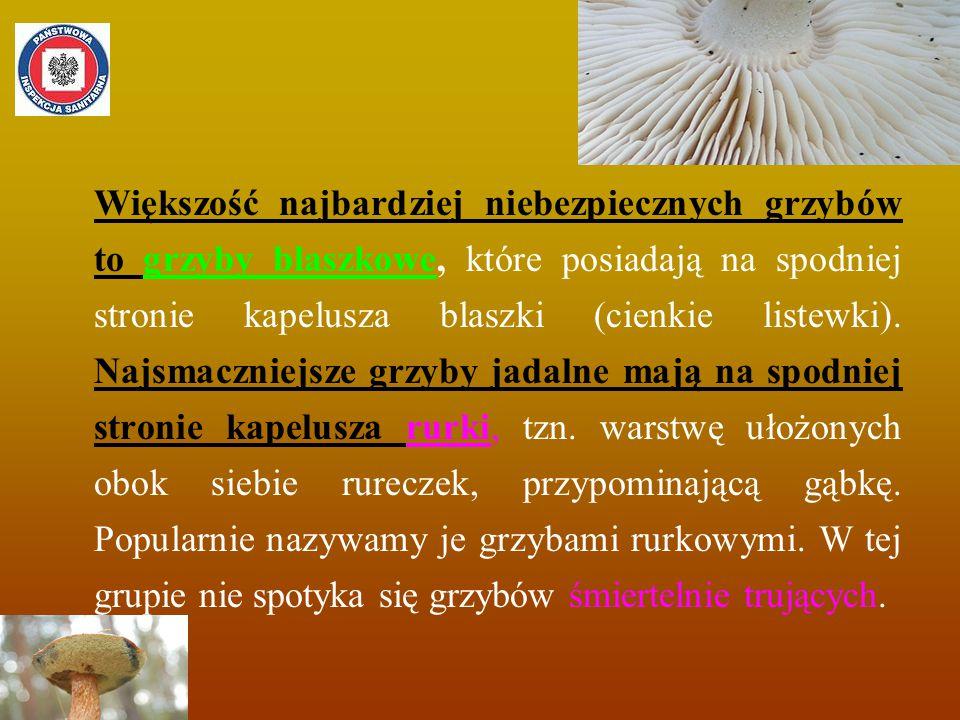 Większość najbardziej niebezpiecznych grzybów to grzyby blaszkowe, które posiadają na spodniej stronie kapelusza blaszki (cienkie listewki).
