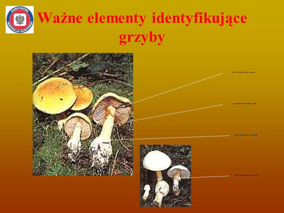 Ważne elementy identyfikujące grzyby ………..………