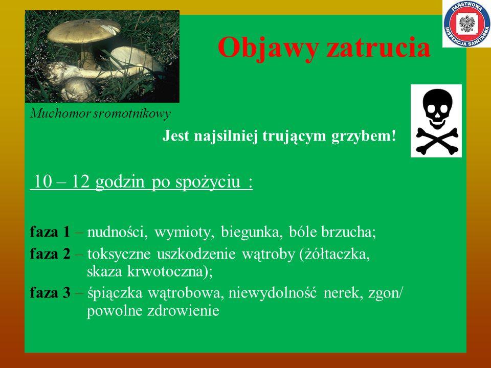 Objawy zatrucia Muchomor sromotnikowy Jest najsilniej trującym grzybem.