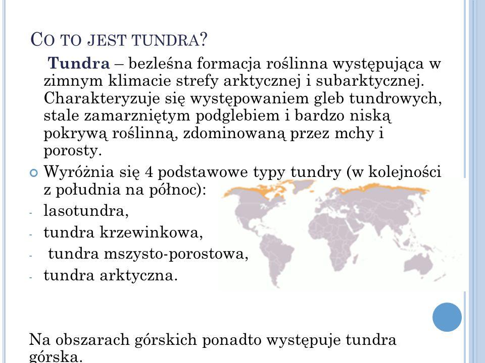 Tundra – bezleśna formacja roślinna występująca w zimnym klimacie strefy arktycznej i subarktycznej.