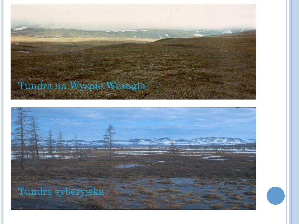 W ARUNKI KLIMATYCZNE Spora część tundry leży za kołem podbiegunowym Lato trwa 2-3 miesiące, temperatura nie przekracza 10 °C, Zima jest mroźna i śnieżna, temperatura dochodzi do -48 °C.