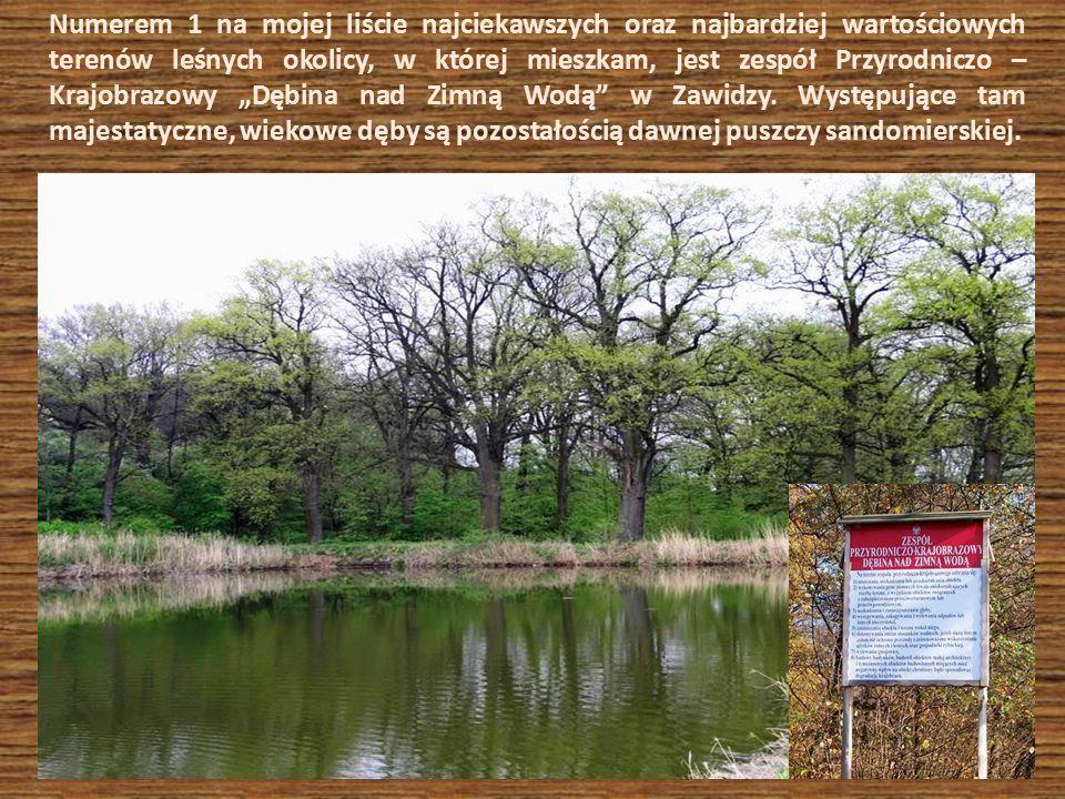Numerem 1 na mojej liście najciekawszych oraz najbardziej wartościowych terenów leśnych okolicy, w której mieszkam, jest zespół Przyrodniczo – Krajobr