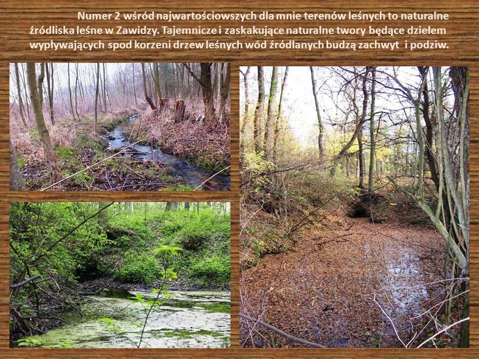 . Numer 2 wśród najwartościowszych dla mnie terenów leśnych to naturalne źródliska leśne w Zawidzy. Tajemnicze i zaskakujące naturalne twory będące dz