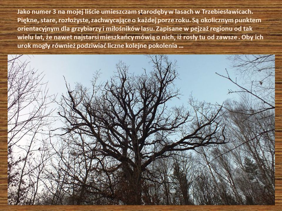 . Jako numer 3 na mojej liście umieszczam starodęby w lasach w Trzebiesławicach. Piękne, stare, rozłożyste, zachwycające o każdej porze roku. Są okoli
