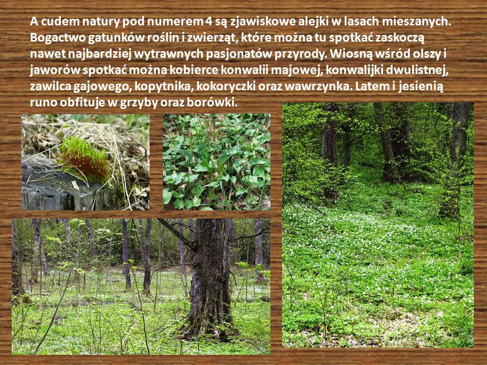 . A cudem natury pod numerem 4 są zjawiskowe alejki w lasach mieszanych. Bogactwo gatunków roślin i zwierząt, które można tu spotkać zaskoczą nawet na