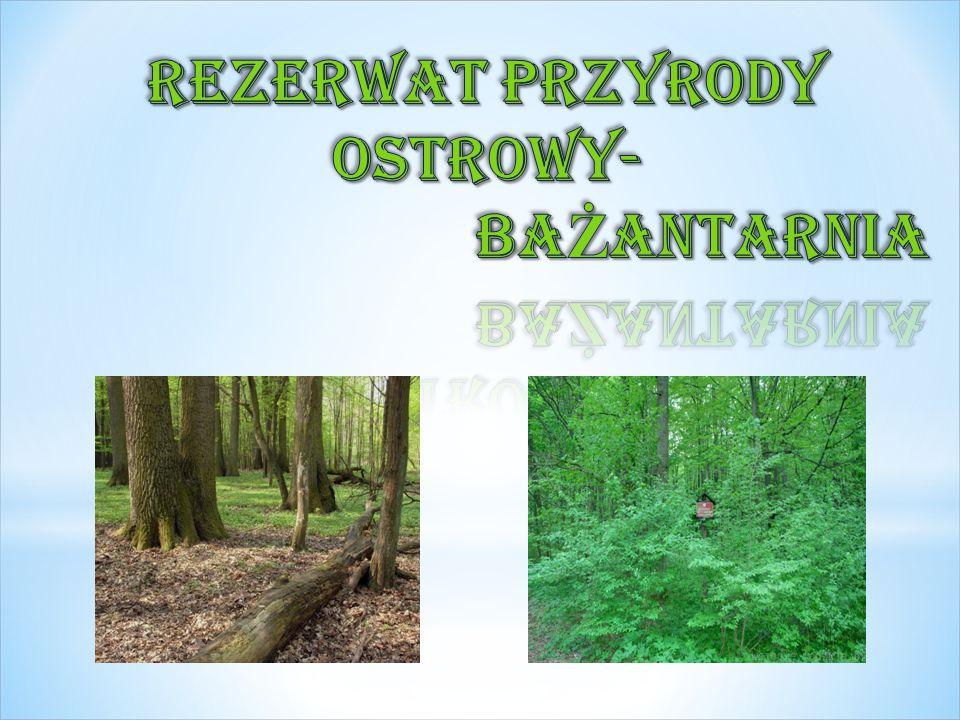 Florystyczny i leśny rezerwat przyrody w gminie Nowe Ostrowy, w powiecie kutnowskim, w województwie łódzkim.