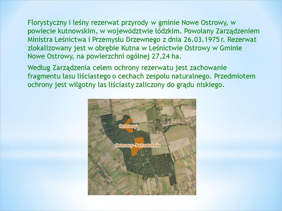 Florystyczny i leśny rezerwat przyrody w gminie Nowe Ostrowy, w powiecie kutnowskim, w województwie łódzkim. Powołany Zarządzeniem Ministra Leśnictwa