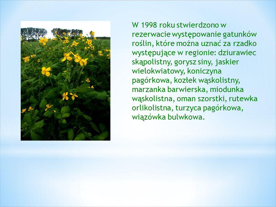 W 1998 roku stwierdzono w rezerwacie występowanie gatunków roślin, które można uznać za rzadko występujące w regionie: dziurawiec skąpolistny, gorysz